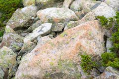 Close-up of multicolored moss on stones in the mountains variegated rough texture of green orange and pastel tones royalty free stock image
