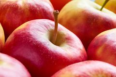 Close-up of red yellow apples with apple stalk. Close-up of multiple red yellow sweat soft organic apples with apple stalk Royalty Free Stock Images