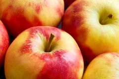 Close-up of red yellow apples with apple stalk. Close-up of multiple red yellow sweat soft organic apples with apple stalk Stock Images
