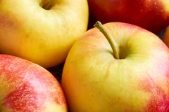 Close-up of red yellow apples with apple stalk. Close-up of multiple red yellow sweat soft organic apples with apple stalk Stock Image