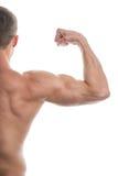 Close up of muscular arm lifting. stock photos