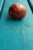 Close up of mushroom cep on turquoise wooden table Royalty Free Stock Images