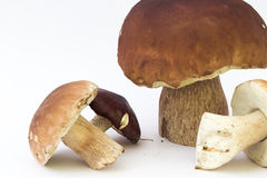 Close-up of mushroom Royalty Free Stock Image