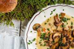 Close-up on mushroom soup and moss from the forest royalty free stock images