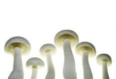 Close up of mushroom Stock Image
