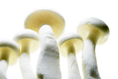 Close up of mushroom Stock Image