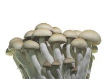 Close up of mushroom Royalty Free Stock Photos