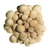 Close up of mushroom Stock Photography
