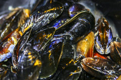 Close up of mussels Royalty Free Stock Photo