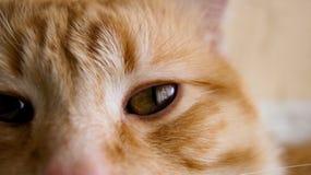 Cat eyes. A close up of my cat pet Royalty Free Stock Photos