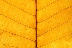 Close-up na folha amarela Fotografia de Stock