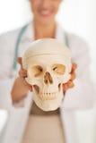 Close up na mulher do doutor que mostra o crânio humano Foto de Stock