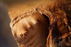 Close up na textura da madeira crua Fotos de Stock Royalty Free
