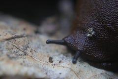 Close-up of the naked slug royalty free stock images