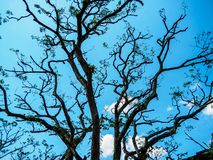 Close up of naked tree branches against a bright blue sky stock photo