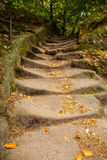 Close up of narrow walkway in forest Royalty Free Stock Images
