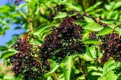 Close-up natural do jardim do verão, tempo de colheita Fotografia de Stock