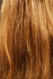 Close-up of natural fair hair Royalty Free Stock Photography