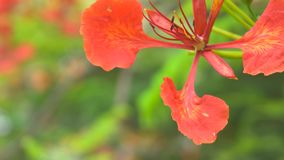 Close up Natural Flower On The Tree In Summer Sun. 4K, UHD Video clip.