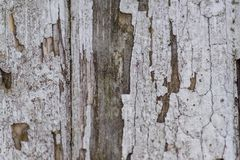 Close up of natural wooden decorative texture background. Dark l stock image