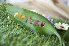 Close up nature detail Stock Photos
