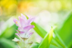 Close up nature of flower Royalty Free Stock Photography