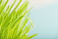 Close up of nature fresh green grass Stock Photos