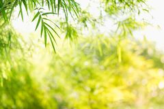 Close up nature of green leaf in park, natural green bamboo Royalty Free Stock Photography