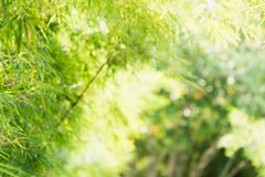 Close up nature of green leaf in park, natural green bamboo Stock Image