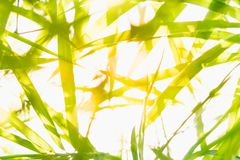 Close up nature of green leaf in park, natural green bamboo Stock Images