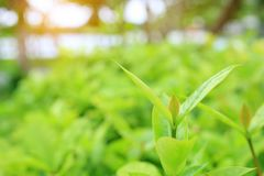 Close-up nature leaves in field for use in web design or wallpaper. Soft Focus.  stock photography