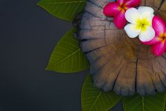 Close up nature plumeria flowers using as wallpeper royalty free stock photography