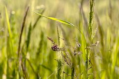 Green natural background with bokeh effect. Close-up of Nature view of green grass on blurred greenery background in field, natural background with copy space royalty free stock photo