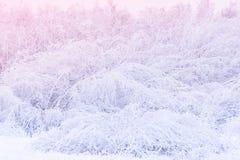 Close-up natuurlijk patroon Sneeuwstruiken die aan grond buigen Sneeuwconcept royalty-vrije stock afbeeldingen
