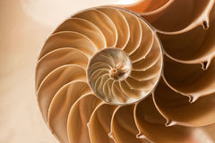 Close up nautilus shell pattern Stock Images