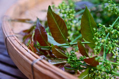 Close-up  Neem leaves and flowers Stock Photos