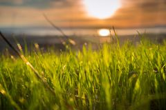Close up of newly sprouted blades of grass. Colored in a sunset light Stock Images