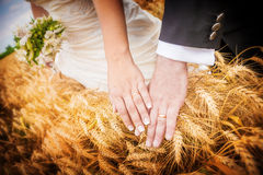 Close up of newlyweds' hands with wedding rings over ears of whe Royalty Free Stock Photo