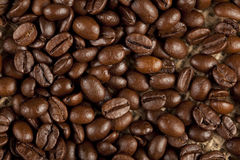 Close-up of nice coffee beans Stock Images