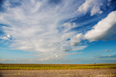 View on corn field Stock Photography
