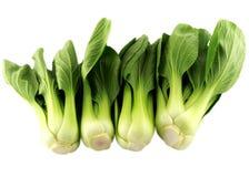 Close up of nontoxic Chinese mustard green. Royalty Free Stock Photography