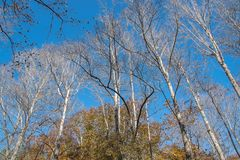 North Mississippi Panoramic Woodland Forest Landscape. Close up of a north Mississippi woodland forest on a crisp autumn day royalty free stock images