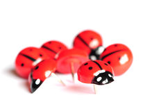 Close up of novelty push pins. Close up shot of ladybird drawing pins on white Royalty Free Stock Photo