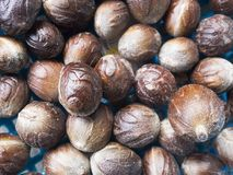 Close up of nutmeg seeds. Close up of pile of nutmeg seeds, Balik Pulau, Penang, Malaysia Stock Images