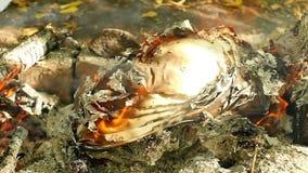 Close-up O papel queima-se com uma chama brilhante no fogo O papel transforma em cinzas filme