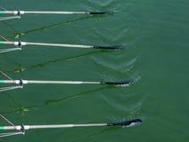 Close Up Oars Of Quadruple Skulls Rowing Team Stock Image