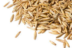 Close-up oat Royalty Free Stock Photo