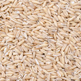 Close-up of oats groats background Stock Images