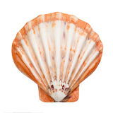 Close up of ocean shell isolated on white Stock Image