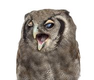 Free Close-up Of A Verreaux`s Eagle-owl - Bubo Lacteus 3 Years Old Stock Photos - 129938543